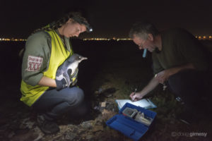 Earthcare StKilda Penguin Research